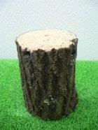 他の写真1: 産卵木 (特A品) クヌギ 1本