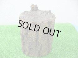 画像1: 高品質 砂埋め霊芝材 1本