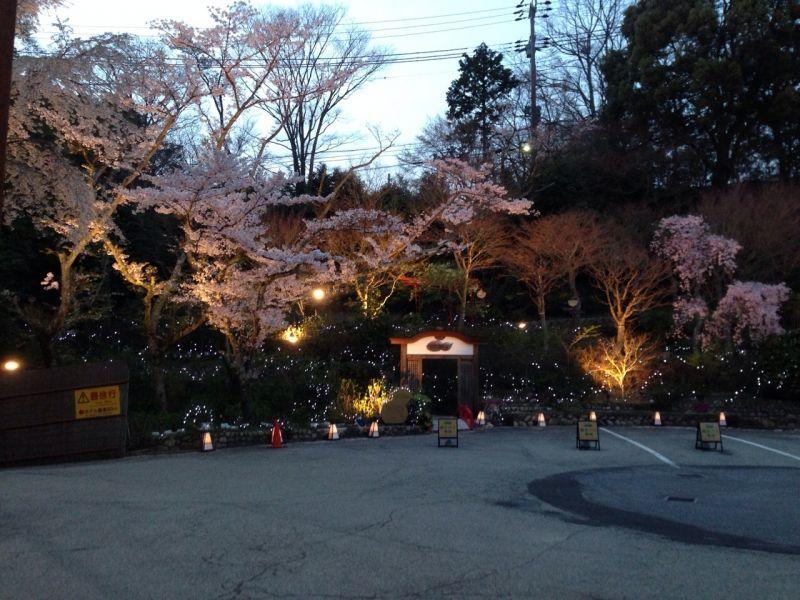 夜桜~!!